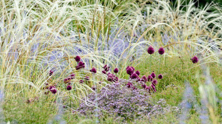 Аллиум и злаковые травы